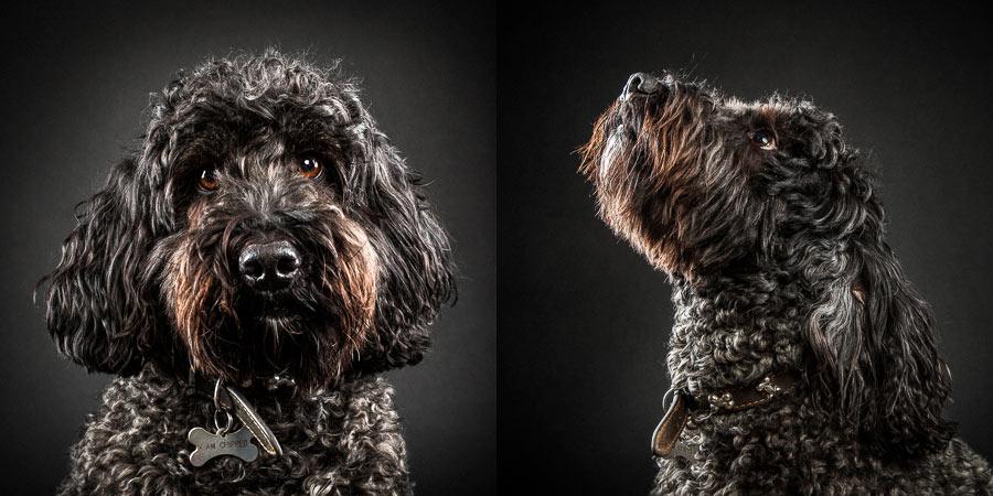 dog-photoshoot