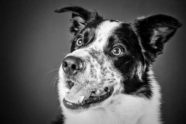 dog-photographer-northampton
